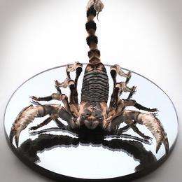 Арт-объект Скорпион (мамонт, серебро, h=22 см)