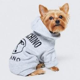 MOSCHINO представляет одежду для собак
