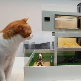 Роскошный дом для хомячка с собственным Макдональдсом