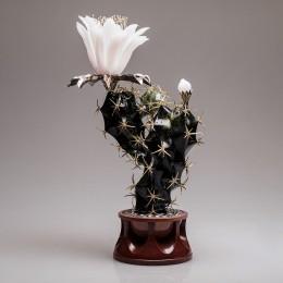 Цветущий кактус (h=28 см., золото, нефрит)