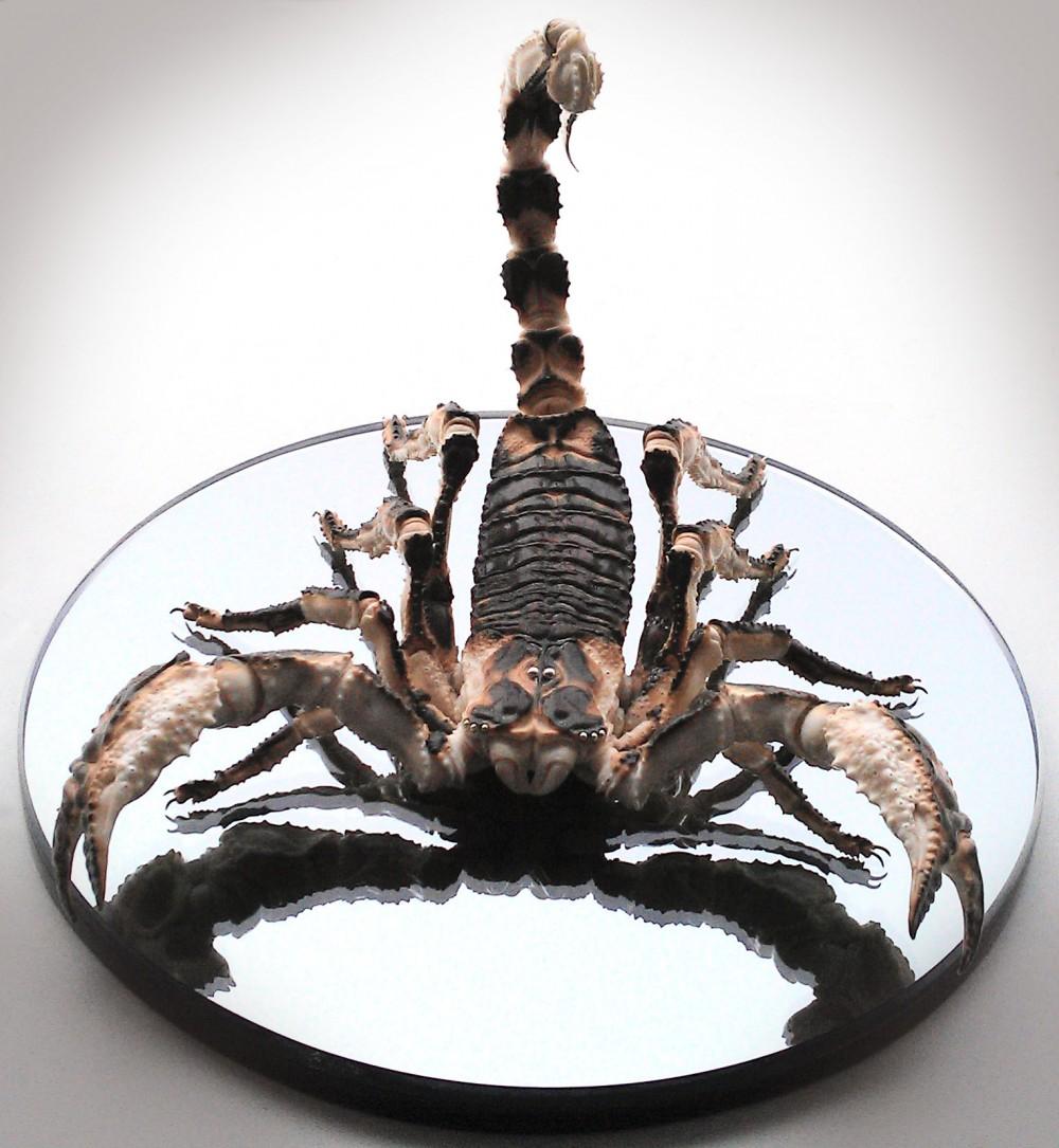 Арт-объект Скорпион